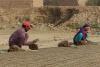 Husband and Wife working on the making bricks